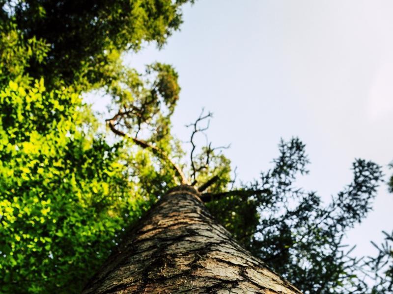 Baum Auschnitt Stamm
